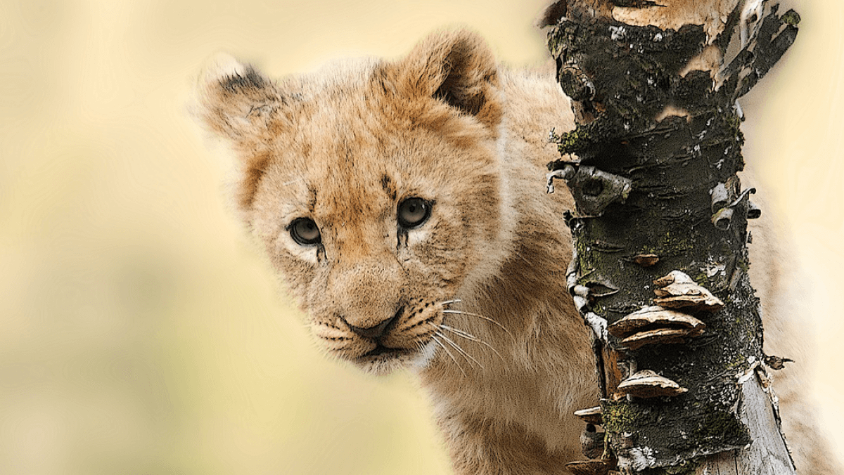 Facia: Yaban Hayvanlarının Nüfusu Son 50 Yılda Yüzde 68 Azaldı